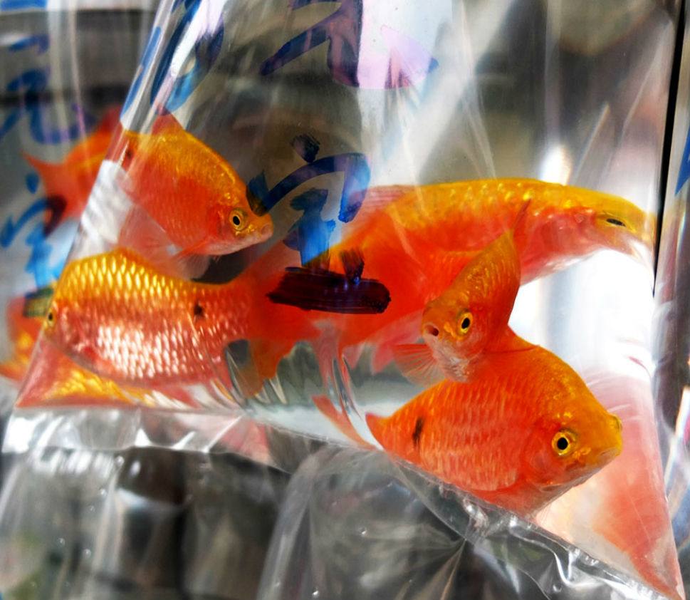 Freshwater fish health benefits - Choosing A Healthy Fish From The Aquarium Stores