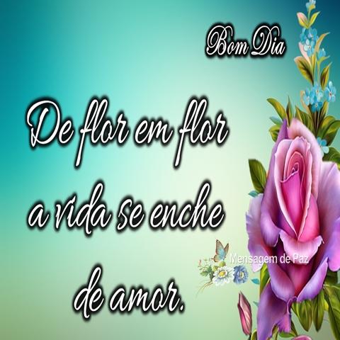De flor em flor  a vida se enche  de amor.  Bom Dia!