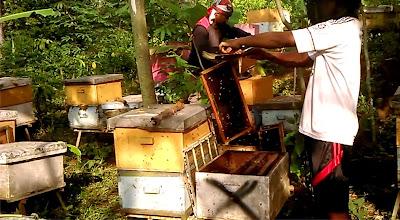 suplier madu, suplier royal jelly, suplier beepollen, suplier beeswax, supllier propolis, toko madu