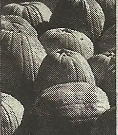 Очищающее действие мякоти тыквы на печень