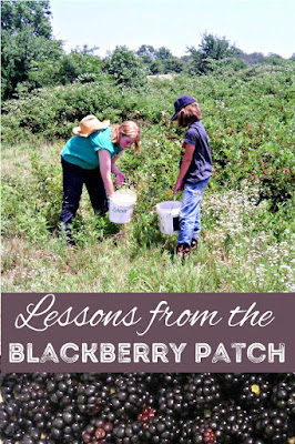 A morning in a blackberry patch teaches rules for living.