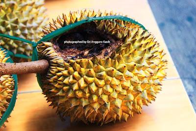 Durian yang bekas dimakan tupai atau bajing