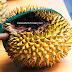 Nikmatnya Durian Bekas Tupai