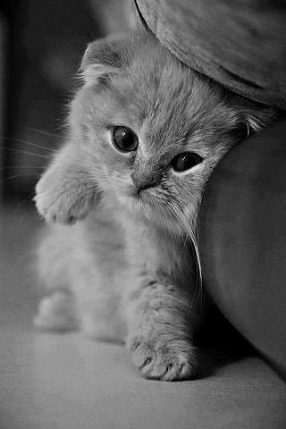 gatito recargado en sillón