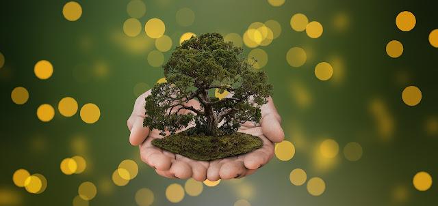 plantar bonsai