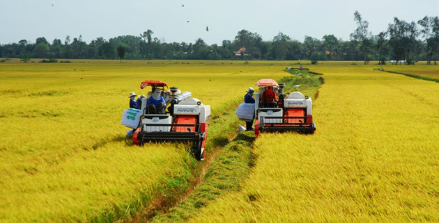 Vietnamese rice makes name in world market