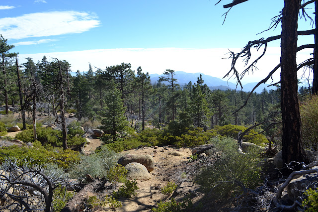 Mission Pine Spring Trail