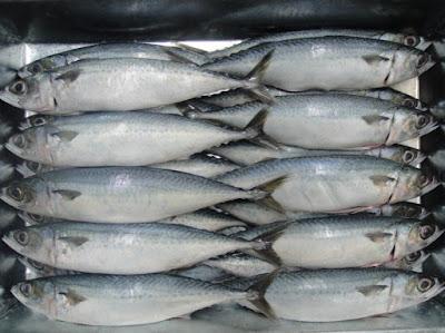 Mackerel Fish Frozen Healthy Recipes
