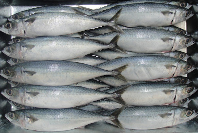 Mackerel Fish Frozen Healthy Recipes