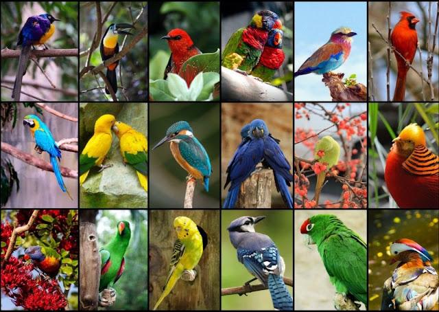 Güzelliğiyle Tüm Dünyayı Büyüleyen Dünyanın En Güzel 10 Kuşu - Kurgu Gücü