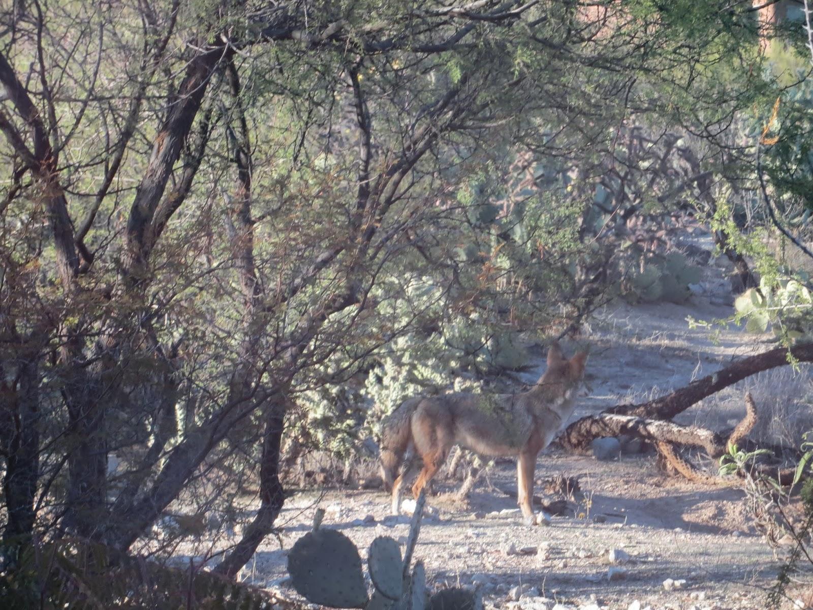 Tucson Wildlife Blog: December 2013