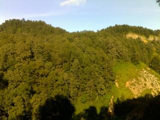 hutan danau kelimutu