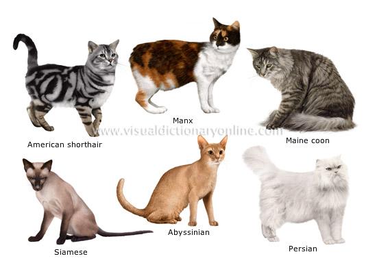 A Cat Breed Comparison Chart