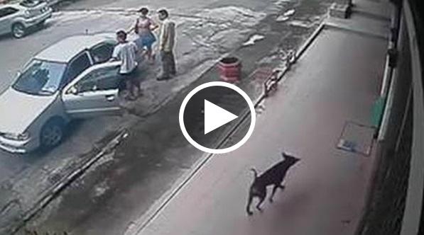 Kejadian Dahsyat Yang Dialami Oleh Netizen!! Tengok Anjing Di Sebelah.. Anjing Tu Lari Jugak!!!