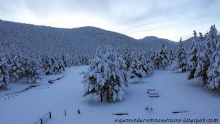 Efectos de la nevada en el Refugio Comes de Rubió