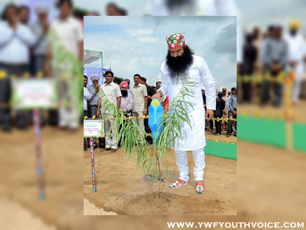 International Green Ambassador Gurmeet Ram Rahim planting tree