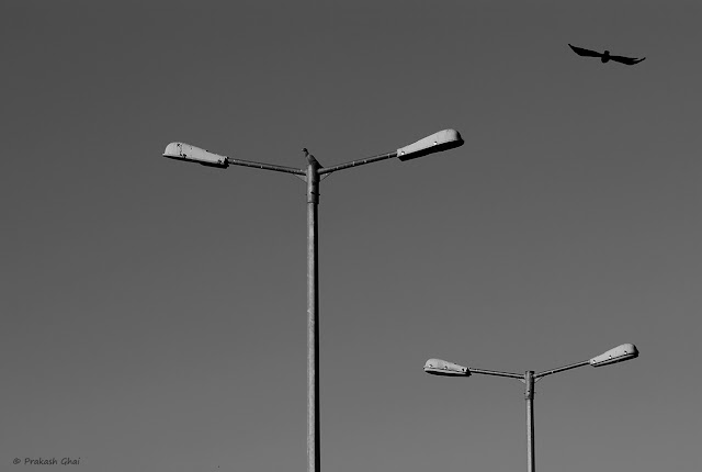 A Looking Up / Look-up Black and White Minimalism Photo of Two Birds, one sitting on one of the street lamps and the other flying across the sky.