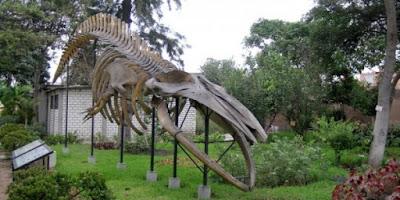 Museo de Historia Natural de Lima