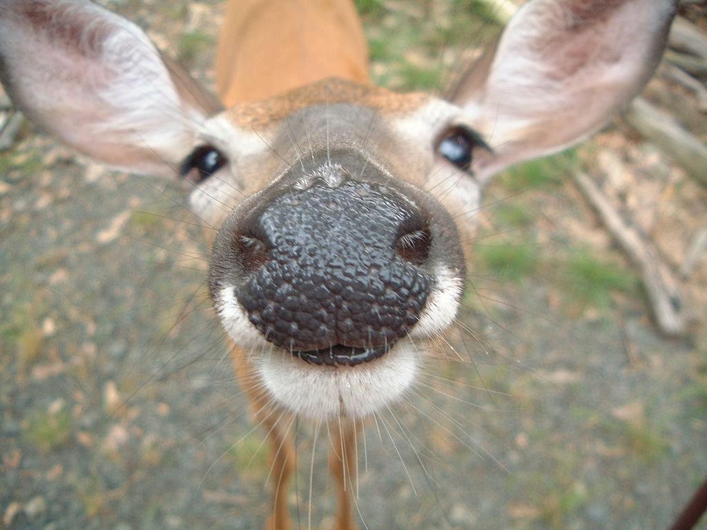Cute+Deer+_2.jpg