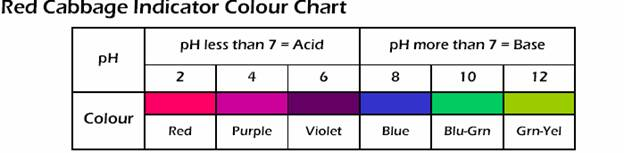 Test pH levels with red cabbage - Discovery Express