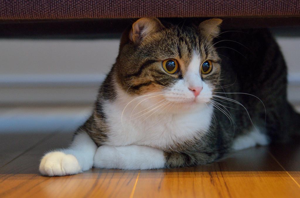 cat diarrhea stuck to fur