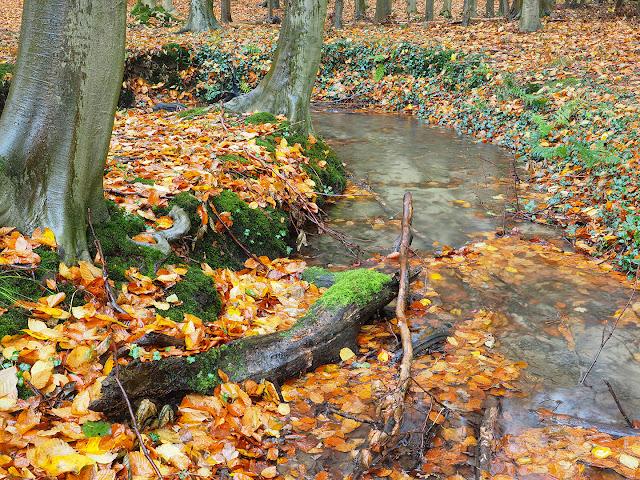 waldbach herbst laubwald wasser