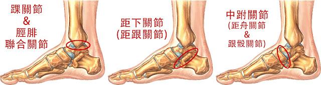 踝關節 脛腓聯合關節 距下關節 距跟關節 中跗關節