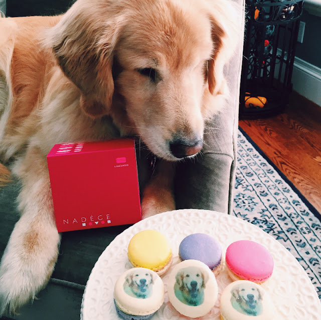 national dog day Nadege patisserie golden retriever macarons