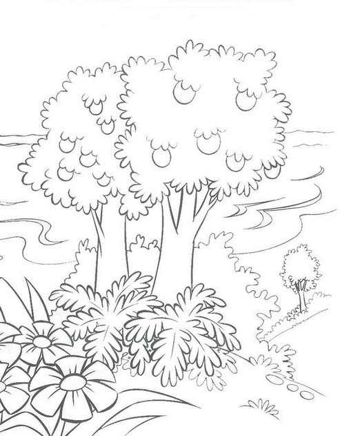 Desenhos De Florestas Imagui
