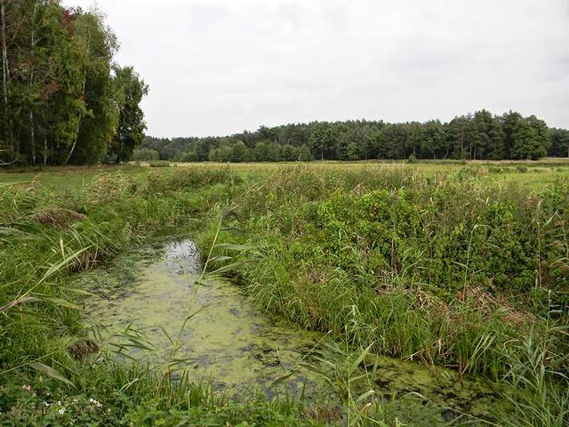 zielona woda, rośliny wodne, Kuligowo, Babimost