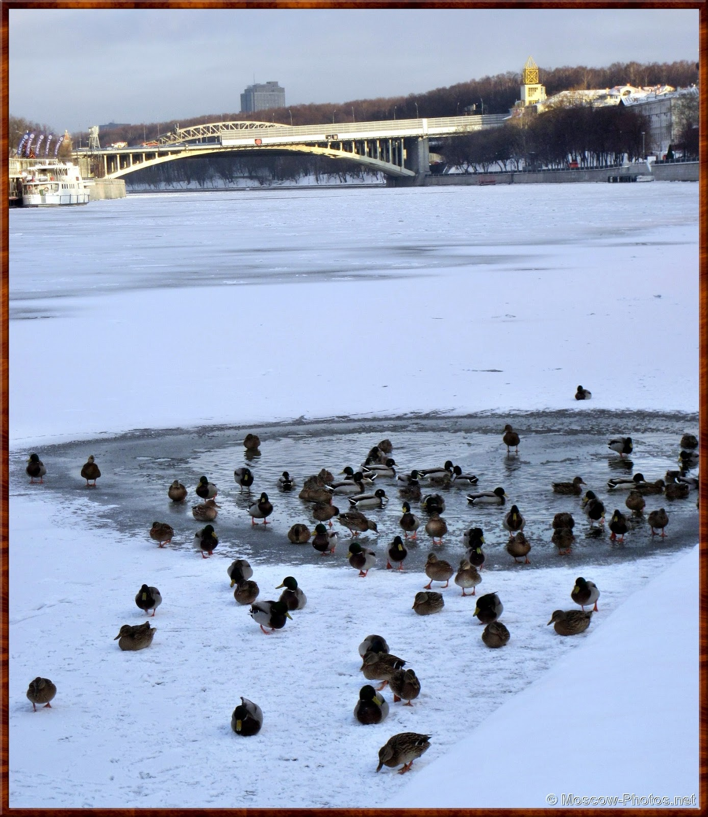 Moskva River and the Ducks