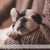 Como preparar um ensaio Newborn Pet?