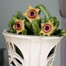 Awas! Bunga Unik Berbentuk Seperti  Donat Coklat Yang Kelihatannya  Lezat Ini Beracun