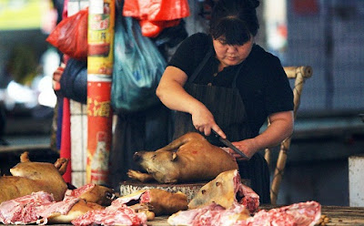 Alasan Daging Anjing Haram - berbagaireviews.com