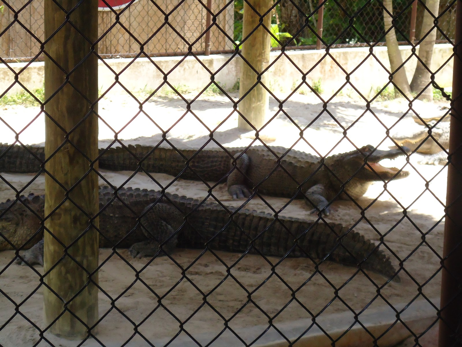 Smooth & Savvy Travels: The Everglades Safari Park