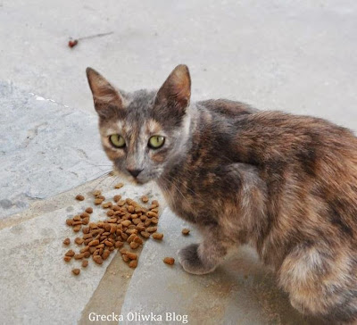 szrobury kot i rozsypana karma
