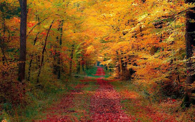 Bomen met herfstbladeren langs een pad