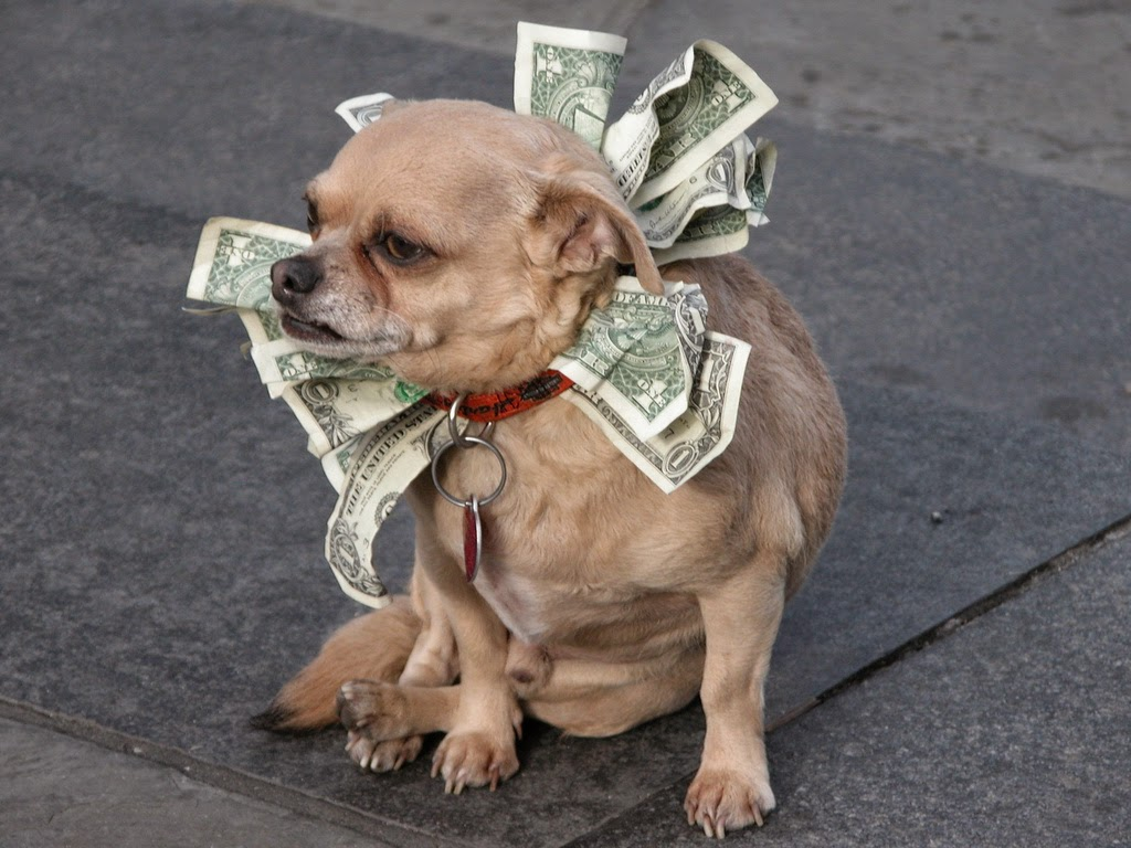 Trained Dog Taking Money on the Street