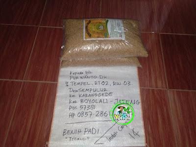 Benih pesanan  PURWANTO Boyolali, Jateng  (Sebelum Packing)