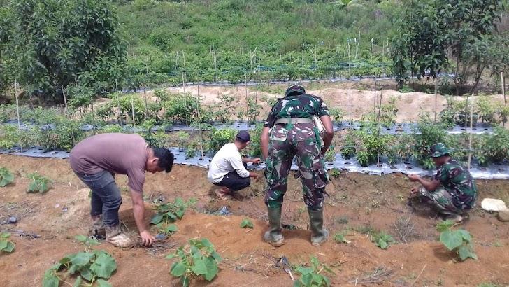 Anggota Satgas TMMD, Membantu Warga Berkebun