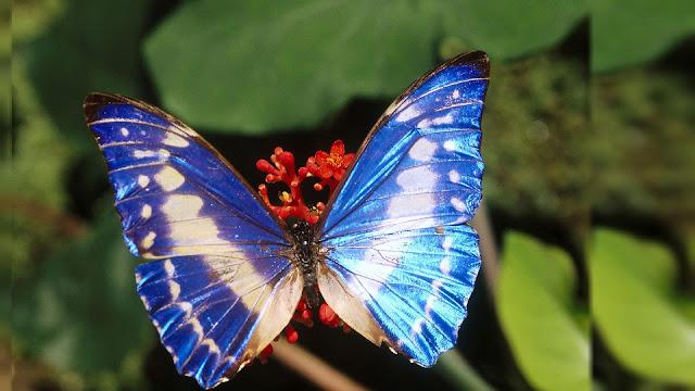 Foto mooie blauw witte vlinder