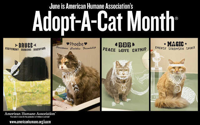 adopt a shelter cat