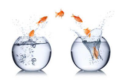 gold fish are shown jumping from one fish bowl to another