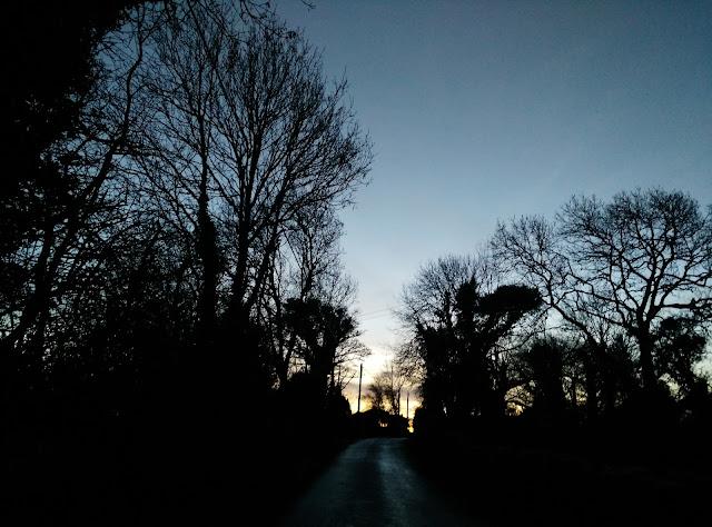 trees in the sunrise, sky