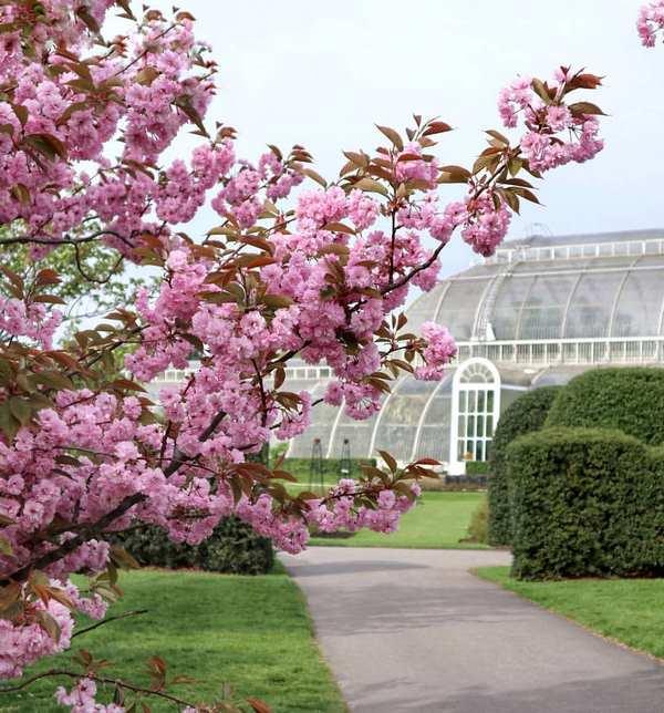 flores rosas de arbol frutal e invernadero de cristal