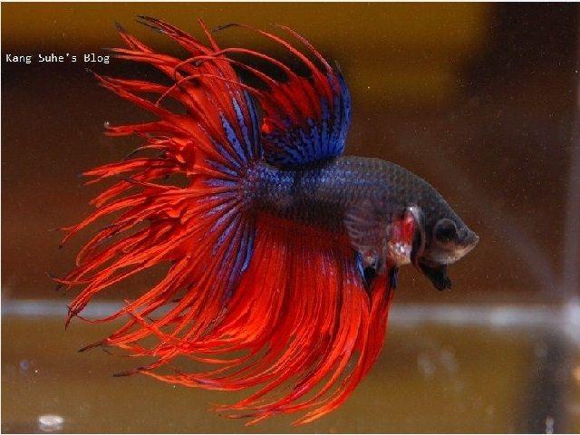 Gambar Ikan Hias Kecil