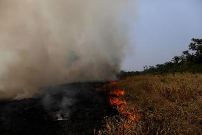 حرائق غابات الامازون, البرازيل, رئة العالم,