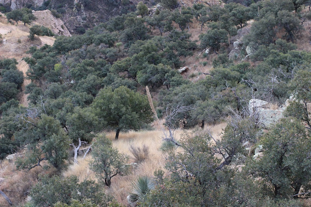 Guided%2BCoues%2BDeer%2BHunts%2Bin%2BSonora%2BMexico%2Bwith%2BJay%2BScott%2Band%2BDarr%2BColburn%2BDIY%2Band%2BFully%2BOutfitted%2B15.JPG