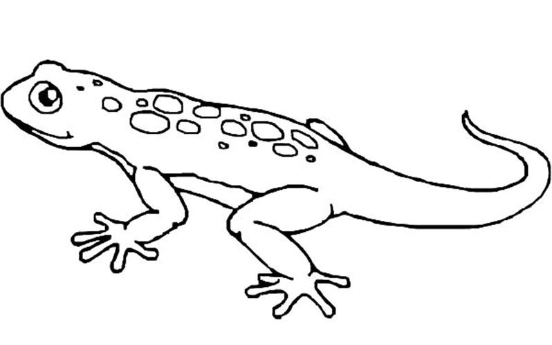 430 Koleksi Gambar Sketsa Hewan Reptil Gratis Terbaru