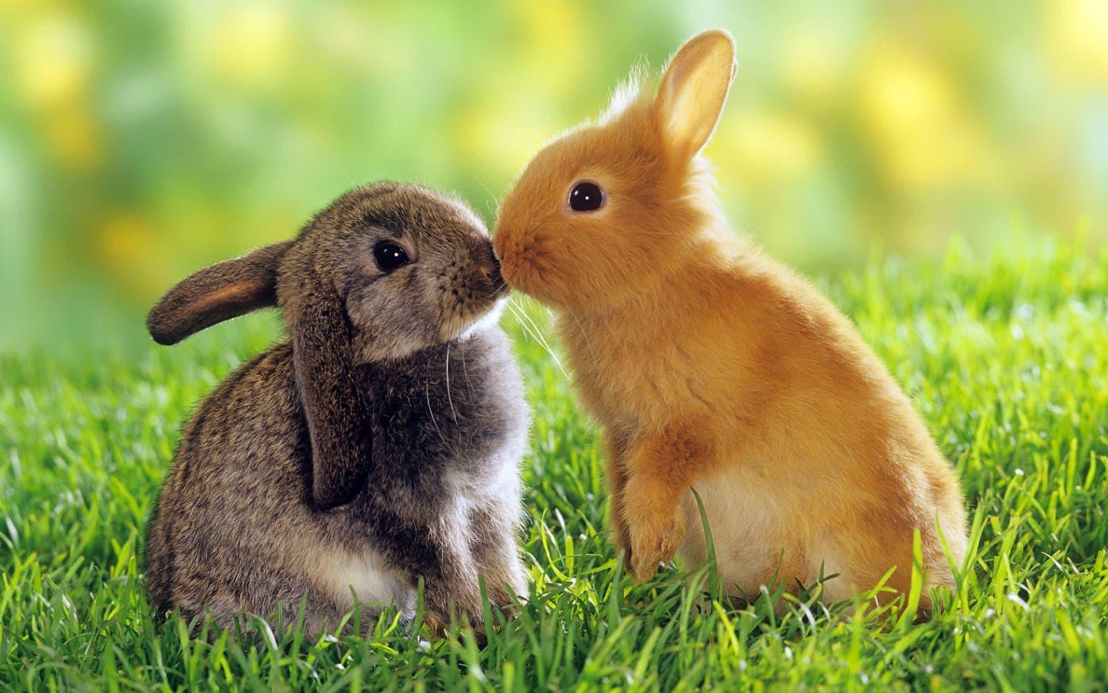 Hình nền hai chú thỏ dễ thương